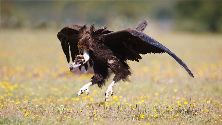 Imagen  Vogelbeobachtung auf den Balearen