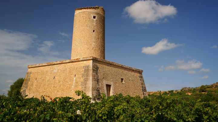 Imagen  Visit the wine cellars and travel to the heart of Mallorca