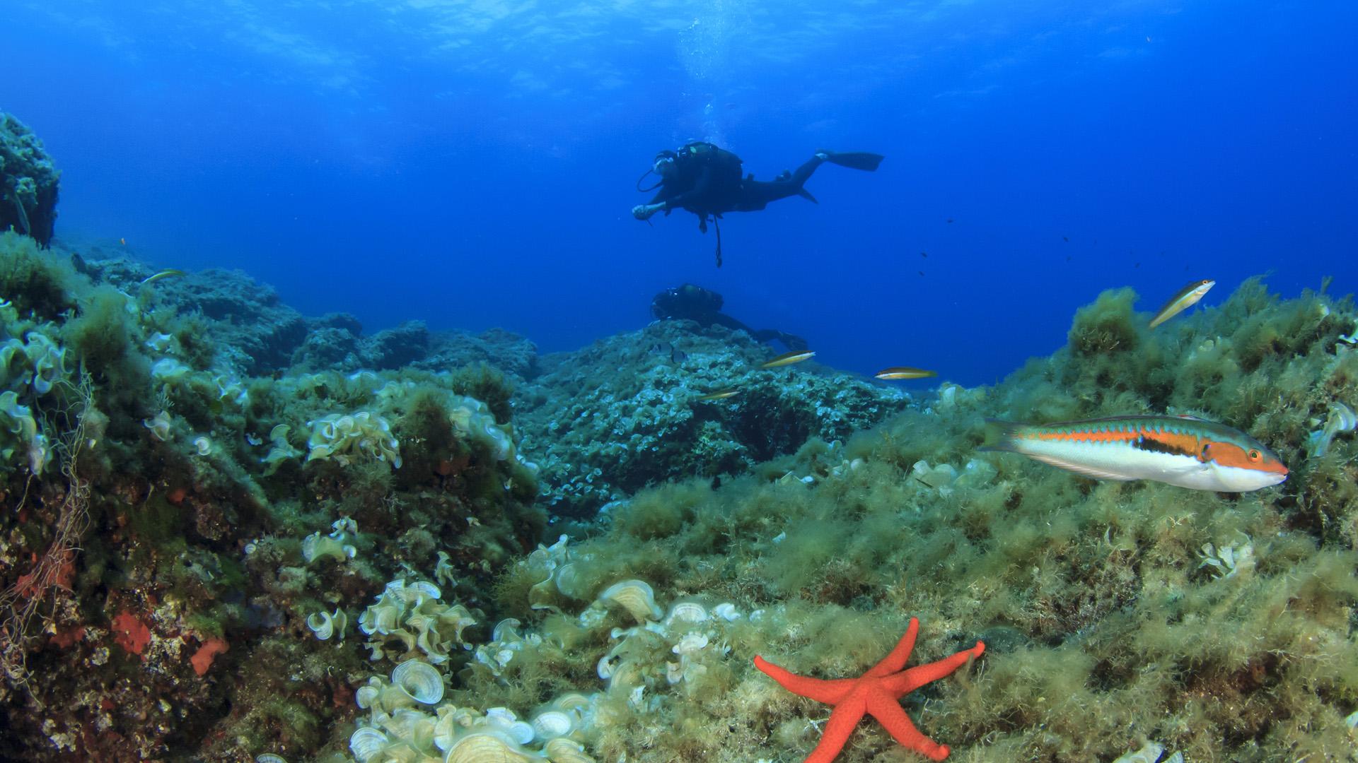 Imagen  Reservas marinas de Mallorca