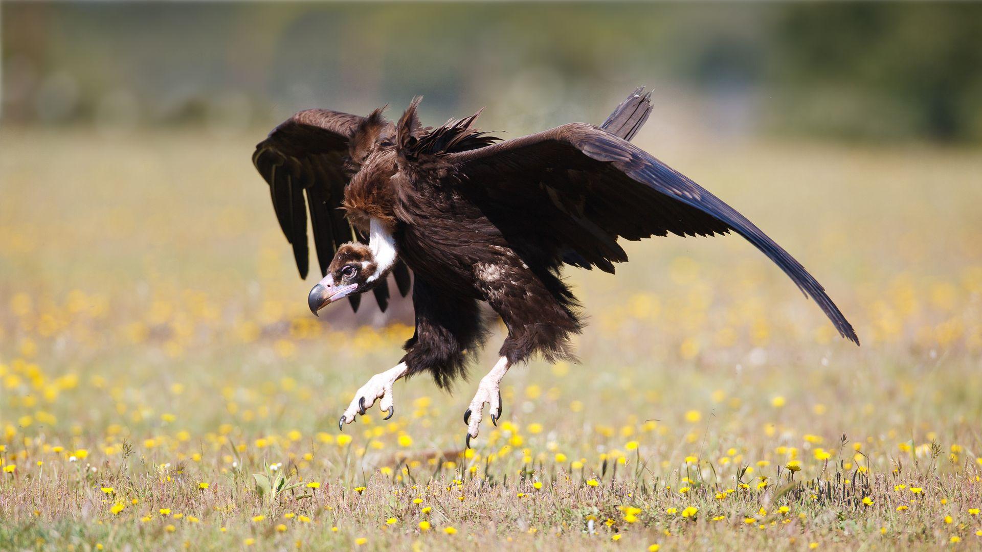 Imagen  Bird watching on the Balearic Islands